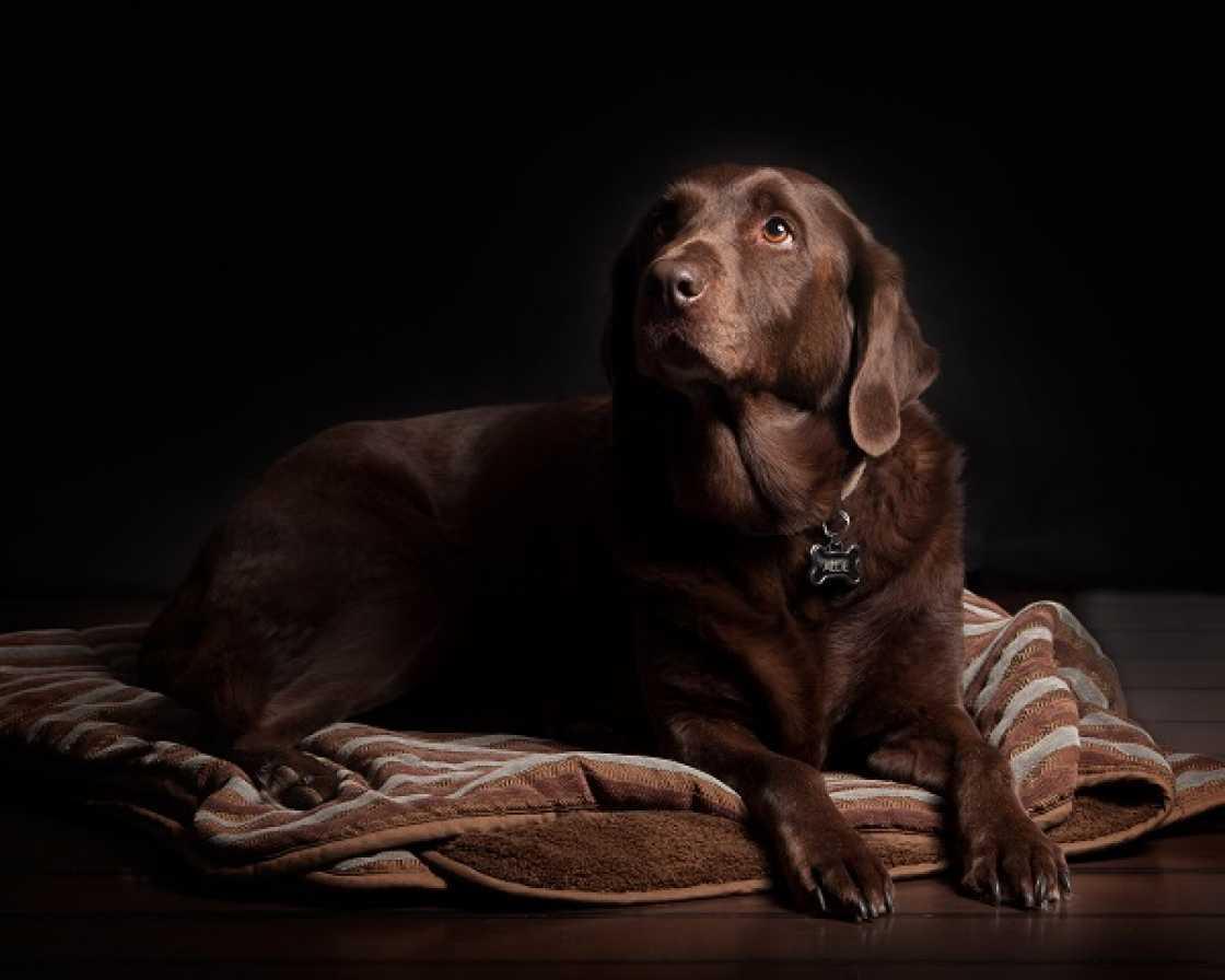 Hondenkussens vergelijken